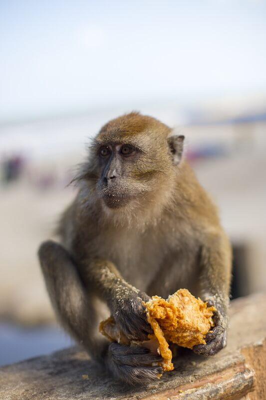 monkey-junkfood